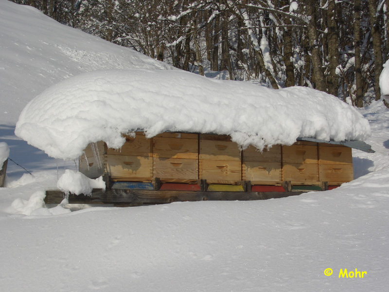 Winterstand5.JPG